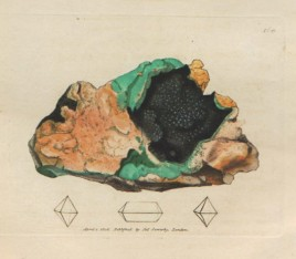 """James Sowerby """"Plate 168"""""""